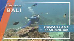 Penjelajah Dasar Samudera Menikmati Indahnya Bawah Laut Lembongan Bali