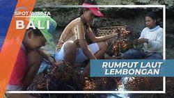 Rumput Laut Nusa Lembongan, Sumber Nafkah Lain Selain Pariwisata Bali