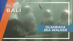 Sea Walker, Menapaki Dasar Laut Bali Melihat Indahnya Bawah Air Pantai Sanur