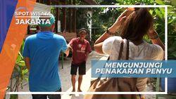 Mengunjungi Tempat Pelestarian Penyu Sisik Pulau Pramuka, Jakarta