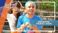 Melepas Penyu Sisik Muda ke Habitat Asalnya, Jakarta