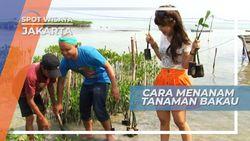 Menanam Mangrove di Bibir Pantai Pulau Pramuka, Jakarta