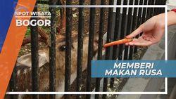 Liburan ke Kota Hujan, Memberi Makan Rusa di Istana Negara, Bogor
