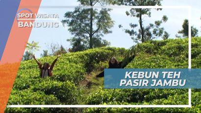 Bermain di Hamparan Kebun Teh Pasir Jambu Ciwidey Bandung