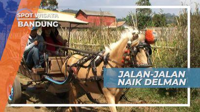 Naik Delman Keliling Desa, Menikmati Suasana Asri Kampung Cikidang Bandung