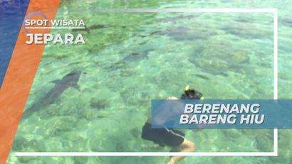 Menegangkan, Berenang Bersama Hiu di Pulau Menjangan Besar Karimunjawa