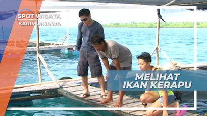 Melihat Dari Dekat Ikan Kerapu Bebek dan Macan di Keramba Karimunjawa Jepara