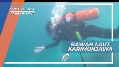 Diving Menikmati Keindahan Bawah Laut Karimunjawa yang Mempesona