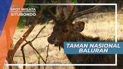 Savana Luas Taman Nasional Baluran, Situbondo