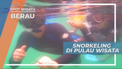 Snorkeling di Pulau Kakaban Berau Kalimantan Timur, Melihat Cantiknya Ubur-ubur