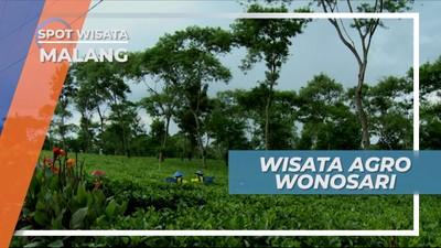 Melihat Hijaunya Hamparan Kebun Teh Wisata Agro Wonosari Kota Malang