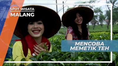 Belajar Memetik Teh di Wisata Agro Wonosari Kota Malang