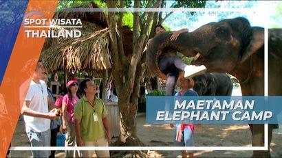 Maetaman Elephant Camp, Pemeliharaan Gajah Chiang Mai Thailand