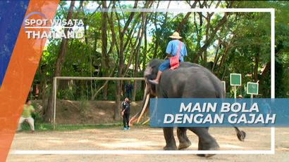 Menahan Sepakkan Bola yang Ditendang Gajah Chiang Mai Thailand, Yang Memukai Hati