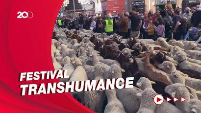 Arak-arakan Ribuan Domba dan Kambing Padati Jalanan di Madrid