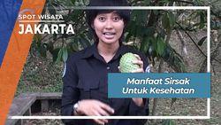Manfaat Sirsak untuk Kesehatan, Jakarta