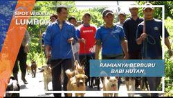 Berburu Babi Hutan dengan Tombak Lumbok Lampung Barat