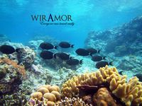 wirAmorTravel