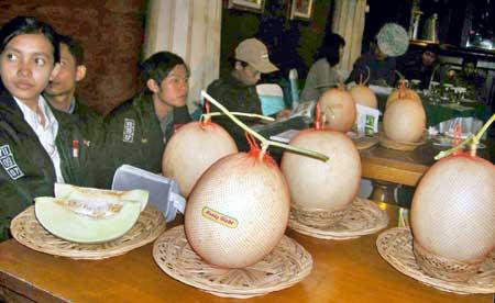 Melon Raksasa Masuk Muri