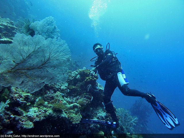 Taman Laut Kepulauan Padaido Taman Laut Penuh Kejutan