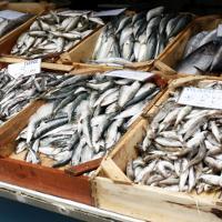Ikan dengan Kandungan Merkuri yang Boleh Dimakan dan Tidak