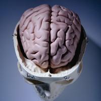 Cara Bikin Otak Terang dan Cemerlang