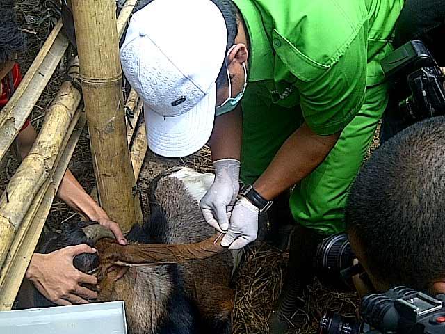 5 Penyakit Manusia Indonesia yang Ditularkan dari Hewan