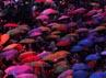 Hujan yang mengguyur Gelora Sriwijaya tak menyurutkan antusiasme penonton yang hadir.