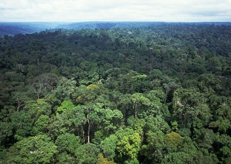 Image Result For Hutan Amazon
