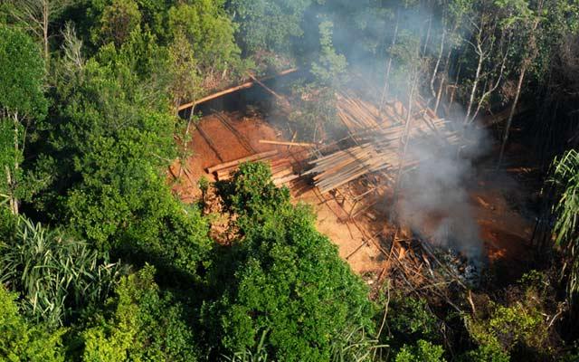 Illegal Logging di Riau Mengganas