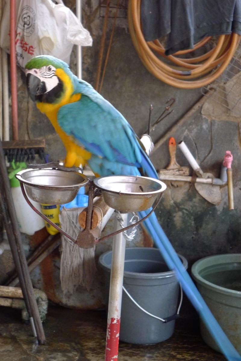 Menikmati Kicau Merdu Di Pasar Burung Pramuka