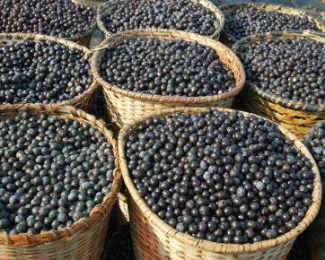 Pro-Kontra Acai Berry Sebagai Suplemen Pelangsing Tubuh