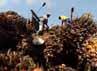 Kelapa sawit tersebut kemudian akan diolah menjadi menjadi minyak sawit mentah alias crude palm oil (CPO).