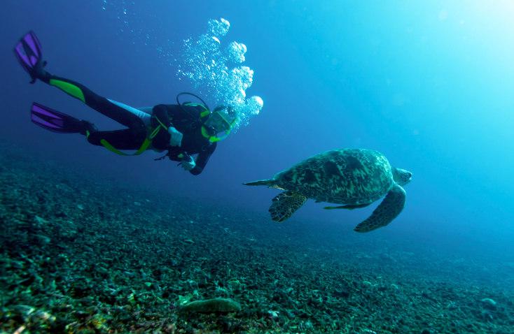 Diving License Indonesia