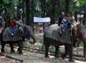 Di kebun binatang ini, pengunjung bisa menunggang gajah dengan dipandu pawangnya. (Ramses/detikcom).