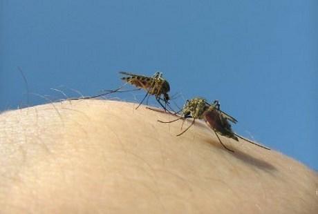 Uuhhh Banyak Nyamuk, Begini Cara Alami Basmi Tanpa Pestisida