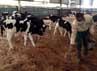 Lokasi peternakan mendapatkan perhatian khusus agar tetap higienis dan nyaman.