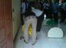 Petugas dari RS Polri Kramat Jati memasukkan jenazah Hadi Susanto ke kantong mayat. (Hendrik I Raseukiy).