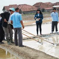 Undip Dongkrak Produktivitas Wirausaha Garam Rakyat