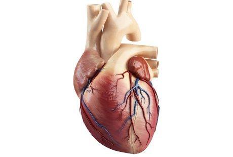 Jantung Membesar Sekaligus Infeksi Paru, Harus Bagaimana?