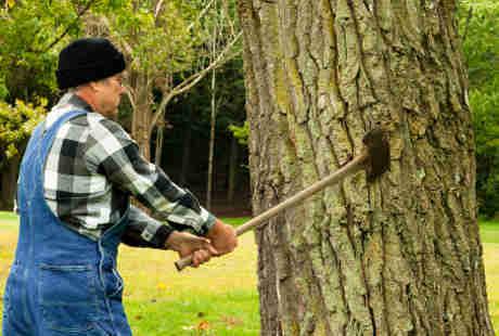 Makin Banyak Pohon Tumbang, Kematian Akibat Sakit Jantung Makin Tinggi