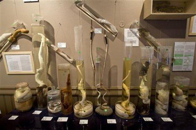 Mengintip Isi Museum Penis, Ada Koleksi Kelamin Manusia Hingga Paus