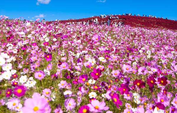 5 Lembah Bunga Paling Cantik Di Dunia