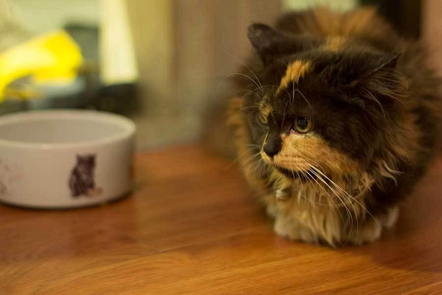 The Cat Cabin Jakarta Bisa Main Bareng Kucing Menggemaskan
