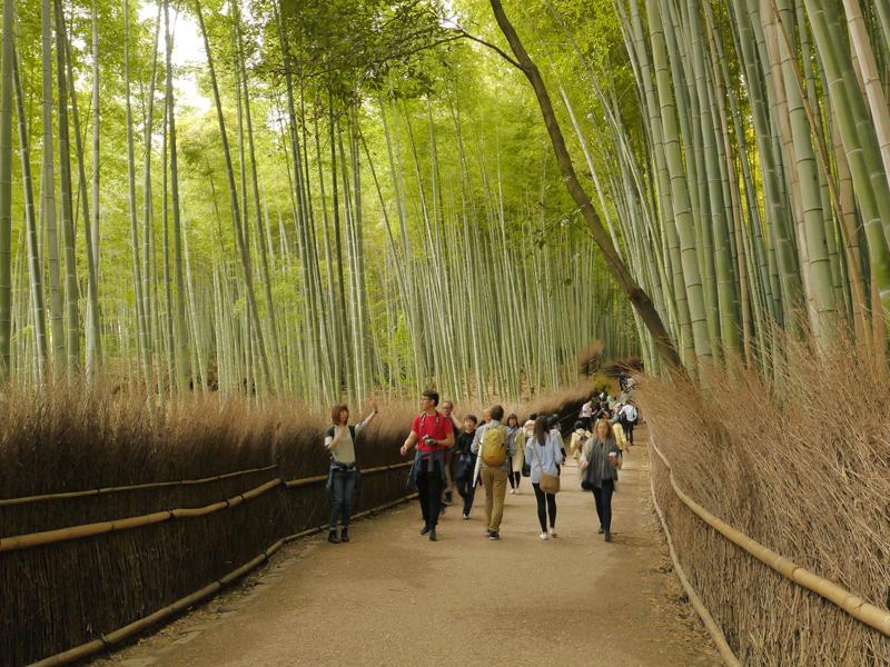 Solusi Stres Unik dari Jepang, Jalan-jalan Santai di Hutan