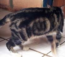 Image result for kucing kalimah Allah tak suka curi ikan