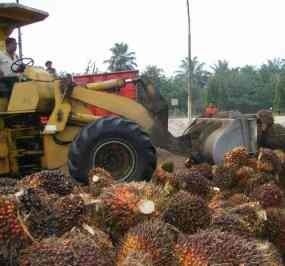 47 Ribu Hektar Lahan Sawit DL Sitorus Segera Dieksekusi