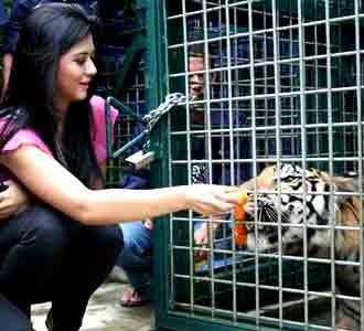 Puteri Indonesia & Harimau Sumatera