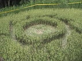 Crop Circle Muncul di Pesawahan di Magelang