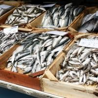 Download 700+ Gambar Ikan Yang Mengandung Merkuri HD Terbaru